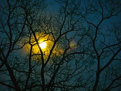 Lunario (Harry Lipson) Tags: tree silhouette night dark evening branches moonrise nocturne lunario panasonicgf1 harrylipson copyrightbyharrylipsonallrightsreservednounauthorizedusagewithoutwrittenconsent
