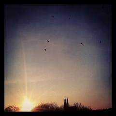 soluppgng i hgalid (nostalgifabriken) Tags: sunset birds hgalidskyrkan soluppgng fglar hgalid kyrktorn