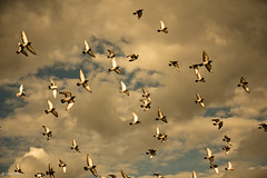 oS pSSAroS (Thiago Marra) Tags: sky weather birds clouds 1 afternoon