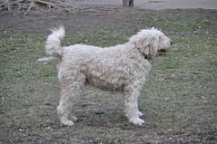 DSC_7825 (sparcly) Tags: people philadelphia dogs rouge football centercity rittenhouse devon philly rittenhousesquare parc phila rittenhousesq