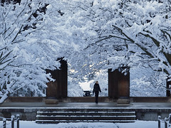 snow flowers in full bloom (k n u l p) Tags: morning flowers snow temple kyoto olympus 京都 雪 nanzenji ep1 zd 1454mm 南禅寺