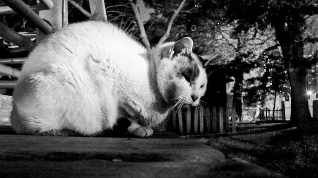 Today's Cat@2012-02-21
