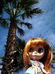 Mackerel at Las Vegas (Postcards From Blythe)
