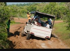jeep stuck in the mud in Yala National Park, Sri Lanka (jitenshaman) Tags: park travel tourism asian nationalpark asia tour jeep mud stuck sink offroad 4x4 tourist safari repair destination srilanka ceylon oriental orient muddy yala worldlocations