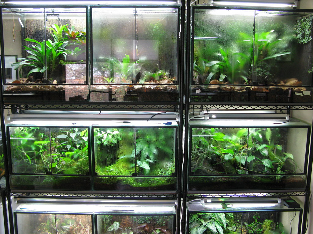 The World 39 S Best Photos Of Protean And Terrarium Flickr