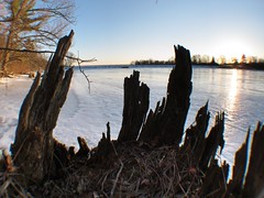In the palm of my stump... (deanspic) Tags: winter ice shore stump hdr g12 semifisheye