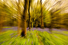 Warp Speed into the Woods (Chris Willis 10) Tags: simon bluebells woods zoom rip burst sait zoomburst annniversary simonsait