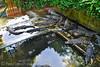 Palawan Wildlife Rescue and Conservation Center (PinoyTravelFreak) Tags: palawan puertoprincesacity crocodilefarmandnaturepark palawanwildliferescueandconservationcenter