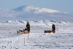 The Berington twins (mdheightshiker) Tags: winter snow alaska race twins ak nome mushing beringsea sleddogs iditarod nortonsound safetyroadhouse safetysound kristyberington annaberington lastcheckpoint