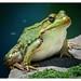 FrogQuest Curriculum Unit