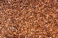 Nadie pinta como el bosque (Multimaniaco) Tags: brown primavera leaves forest hojas spring bed dry bosque fallen navarra secas marrn cadas lecho quintoreal