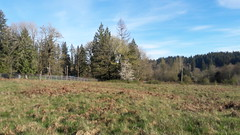 20160331_085824 (ks_bluechip) Tags: creek evans trails preserve sammamish usa2106