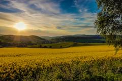 IMG_1907_8_9_fused-2 (Andr Leonhardt) Tags: trees sunset nature beauty clouds landscape deutschland abend heaven sonnenuntergang natur himmel wolken landschaft bume raps hdr erzgebirge