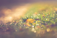 Just Leaves (HMM) (Bokehschtig (OFF)) Tags: color colour grass leaves leaf dof bokeh sony lawn meadow bubbles depthoffield hmm walimex a7 samyang macromonday sonya7 samyang8514 walimexpro8514