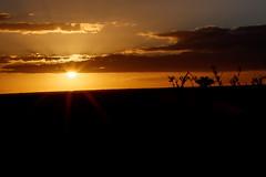 Star Sunset over Addo (markdescande) Tags: africa road park travel wild sky elephant green tourism nature grass animal landscape southafrica addo outdoor african background wildlife south reserve safari dirt national naturereserve environment easterncape kruger gamereserve addoelephantnationalpark zaf