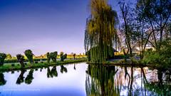 (NaSaConnection) Tags: sunset landscape see wasser sonnenuntergang weepingwillow teich landschaft spiegelung baum abendstimmung romantisch trauerweide rittergutbirkhof