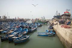 Morocco (fredcan) Tags: africa morning travel birds port boats seaside harbour morocco maroc maghreb fishingboats essaouira seaguls atlanticcoast fredcan