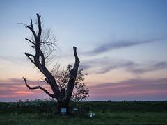 P5110085 (veneman) Tags: old sky tree twilight flevoland lelystad oostvaardersdijk houtribweg