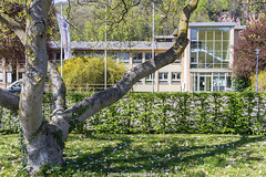 Neckargemnd City Hall in April 2016 (boettcher.photography) Tags: city germany spring cityhall stadt april rathaus frhling neckargemnd 2016 badenwrttemberg rheinneckarkreis sashahasha boettcherphotography