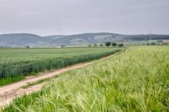 DEX_9337 (Dejan Stefanovic) Tags: nature serbia gora vojvodina srbija polje fruska psenice