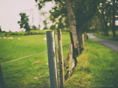 Fence meets road ... (w.mekwi photography) Tags: uk trees scotland dof bokeh hff nikond800 fencefriday wmekwiphotography analogefexpro