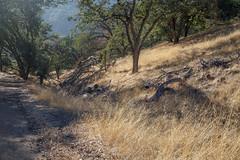 Pleasanton Ridge Regional Park (silkylemur) Tags: california canon lens unitedstates hiking sanfranciscobayarea eastbay fullframe canoneos pleasanton hikingtrail zoomlens llens 24105mm canonef canonef24105mmf4l canonef24105mmf4lisusm  pleasantonridgeregionalpark eflens eastbayregionalpark canonef24105mmf4lisusmlens efmount canoneos6d