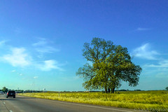 Lone Tree In Corsicana (spanjavan) Tags: road red sky tree green car clouds highway afternoon freeway northbound i45