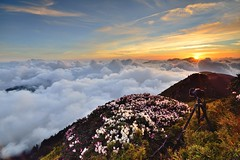 Alpine flowers @ Mt. Hehuan  (Vincent_Ting) Tags: sunset sky mountain night clouds sunrise star glow taiwan trails galaxy flare moonlight formosa   crepuscularrays startrails milkyway  seaofclouds            mountainhehuan             vincentting   hthehuan