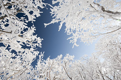 Blue in white (masato_55) Tags: morning blue sky white mountain snow tree ice japan nikon    d700