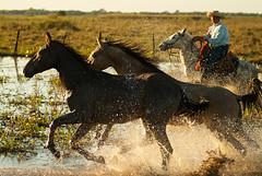 Vaqueiro do Pantanal / Pantanal cowboy (Samuel Betkowski) Tags: ranch horses horse water gua cowboy cavalos cavalo matogrosso pantanal fazenda pantaneiro pantanalcowboy vaqueirodopantanal