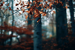 rhythm (ewitsoe) Tags: morning autumn trees light lake fall nature leaves forest season 50mm woods