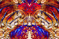 The Strange Creature From Planet X (LostMyHeadache: Absolutely Free *) Tags: abstract art texture nikon experimental alien creative surreal negative sciencefiction organic trippy psychedelic inverted davidsmith strangecreature planetx outthere longstrangetrip calgaryalbertacanada buriedforwhoknowshowlong