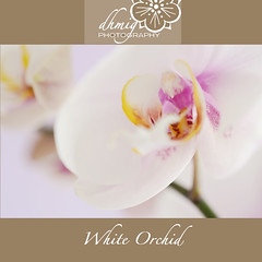White orchid (dhmig) Tags: pink italy orchid flower macro nature beauty closeup petals nikon dof bokeh feminine details softness naturallight indoor innocence sensuality freshness purity femininity romanticism whiteorchid 50mmf28 fragility pastelcolors softcolours softcolor nikond7000 dhmig dhmigphotography