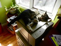 64/365 (and you, my wayward girl.) Tags: cute cat tabby sally 365project nikoncoolpixp500