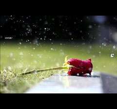 And when it's over, and it's gone you almost wish that you could have all that bad stuff back so that you could have the good. (*karla) Tags: light red green rain rose canon 50mm dof bokeh drop