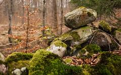 Act of balance (Hkan Dahlstrm) Tags: green forest skne rocks sweden cropped skane 2012 f40 ef50mmf25compactmacro tollarp canoneos5dmarkii sek 2111032012154234