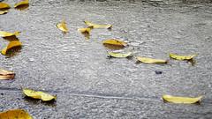Folhas Secas.. Cho molhado (Joo Mendes Neto) Tags: folhas riodejaneiro rj natureza vida fonte joao tangu joaomendes joaomendsneto joaomends