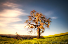 Tree Study IV (Silent G Photography) Tags: california ca tree sunrise landscape nikon adobe nik centralcoast hdr highdynamicrange winecountry pasorobles 2012 onone reallyrightstuff rrs photomatix tonemap 10stopndfilter bwnd110 d7000 nikkor1635mmf4 markgvazdinskas silentgphotography