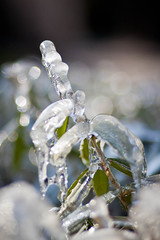 Ice tree (Look me Luck Photography) Tags: trees snow tree green ice glass colors leaf places aixenprovence hielo glace parcrambot