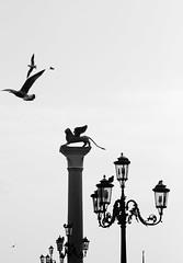 La Serenissima (GrazianoCallegaro) Tags: venice bird lights uccelli lions luci venezia leonealato