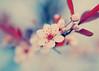 Awakened (SOMETHiNG MONUMENTAL) Tags: new pink blue red flower macro tree nature spring bush nikon bloom d60 somethingmonumental mandycrandell