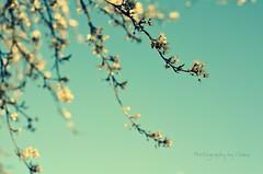 Spring (clickinmum) Tags: blue sky tree green garden 50mm nikon blossom bokeh d7000