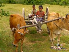 Ox Cart- Koh Ker.jpg