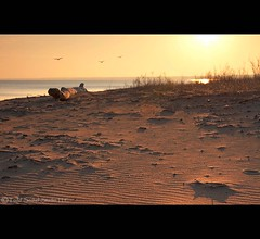 Unseasonably Warm. Nickelplate Beach - Huron, Ohio (tsechel) Tags: morning light ohio seagulls beach sunrise sand lakeerie footprints greatlakes driftwood ripples february huron unseasonablywarm leefilters nickelplatebeach