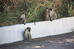 "Primates • <a style=""font-size:0.8em;"" href=""http://www.flickr.com/photos/57634067@N04/6929353949/"" target=""_blank"">View on Flickr</a>"