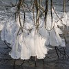 Les derviches tourneurs ( the whirling dervishes ) (Larch) Tags: winter white france ice water dance eau niceshot hiver danse icicle 74 blanc soe dervish glace lakegeneva glaçon whirlingdervish hautesavoie wow1 wow2 wow3 wow4 lacléman yvoire derviche dervichetourneur olétusfotos mygearandme mygearandmepremium mygearandmebronze ringexcellence blinkagain dblringexcellence tplringexcellence domainederovorée flickrstruereflection1 flickrstruereflection2