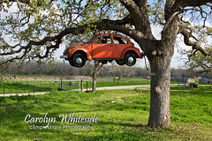 The VW Love Bug Tree