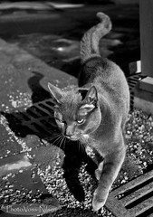 Street_cat (Voss-Nilsen) Tags: shadow bw cats white black animal animals cat canon feline shadows felines shadowplay katter dyr katt monocrome skygge svarthvitt kattedyr svarthvit skygger digitalfoto skyggespill vossnilsen