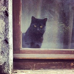 Un gatto (Kazze) Tags: italy milan window cat square lofi squareformat iphone amaro thecatwhoturnedonandoff iphoneography instagram instagramapp uploaded:by=instagram