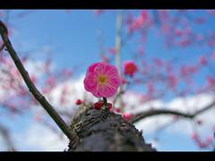 Never forget - 311 (Toshi_KMR) Tags: pentax cosina k5   cosina24mmf28mcmacro kimtoshi toshikmr pentaxk5